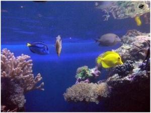 Postkarte aus Stockholmer Aquarium